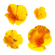 Collection Of Yellow Flowers I...