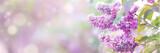 Fototapeta Kwiaty - Lilac flowers spring blossom, sunny day light bokeh background