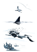 Diver, Shark, Seagull, Fish And Seaweed