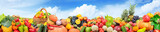 Panorama fruits and vegetables against background green field and bright sky.