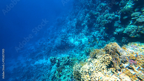 corals on the seabed