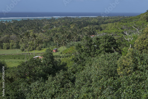 Foto op Plexiglas Khaki Rarotonga Cook Islands. Pacific. Tropical jungle.