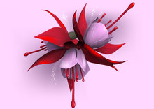 Fuchsia On Pink Background