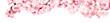 canvas print picture - Rosa Kirschblüten Freisteller Panorama auf weißem Hintergrund