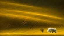 Spring Wavy Yellow Rapeseed Fi...