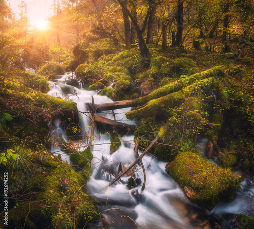 Montage in der Fensternische Wasserfalle Colorful green forest with little waterfall at mountain river at sunset in autumn. Landscape with stones covered green moss in water, trees, waterfall and vibrant foliage. Nature. Blurred water