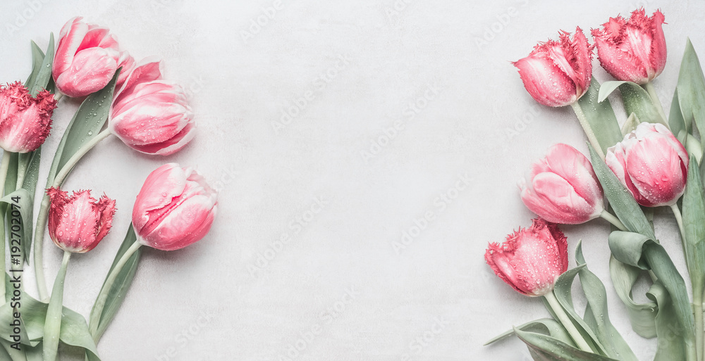 Fresh pink tulips banner with copy space. Layout for spring holidays greeting card