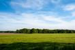 canvas print picture - gruenes Feld mit Getreide unter blauem lebhaften Himmel mit Wald im Hintergrund