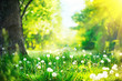 Leinwandbild Motiv Beautiful spring landscape. Park with old trees, green grass and dandelions
