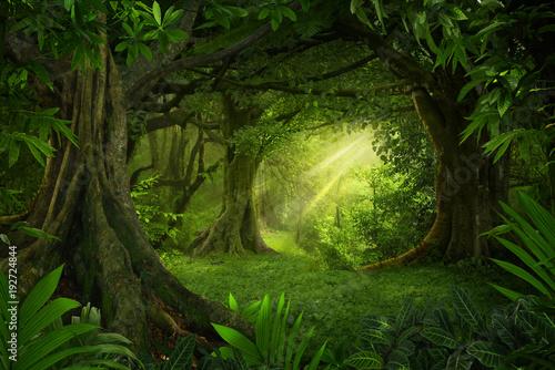 Poster de jardin Bambou Asian tropical rainforest