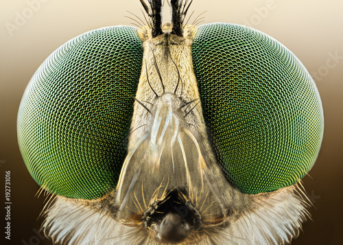 Door stickers Macro photography Extreme sharp and detailed macro of robber fly