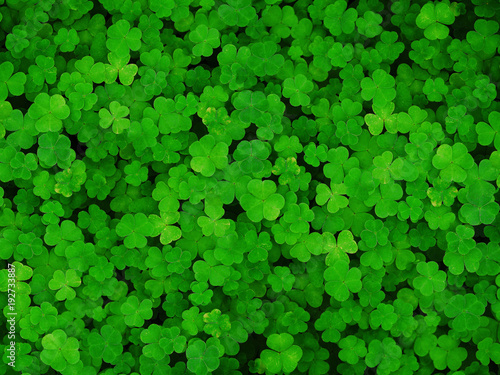 Fotografia Natural green dark background