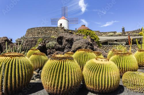Deurstickers Canarische Eilanden Beautifully designed cactus garden on Lanzarote with windmill in the background, close-up, Guatizia, Lanzarote, Canary Islands , Spain, Europe