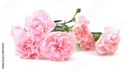 Carnations on white Canvas Print
