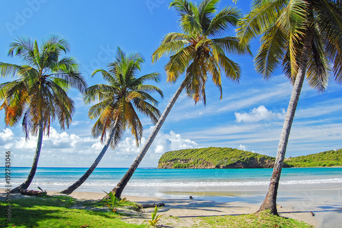 Palm trees in beautiful secluded beach on Grenada Island, Caribbean