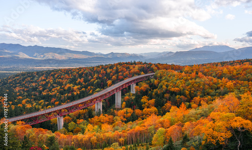 Aluminium Prints Autumn a autumn forest in Hokkaido , Japan with a high way through the forest at Mikuni Pass