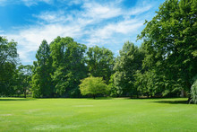 Green Glade Covered With Grass In Park. Free Space For Text.