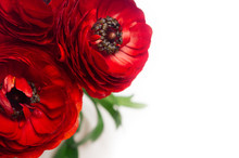 Deep Red Flower Bouquet Closeup With Copy Space On White Wood Background. Festive Summer Backdrop.