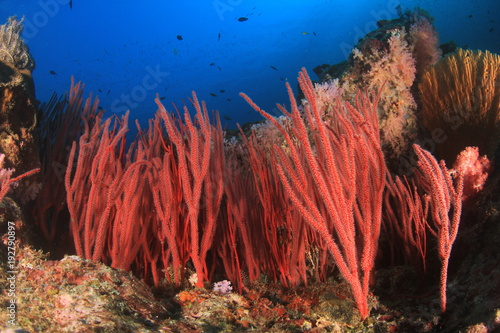 Foto op Canvas Onder water Fish on coral reef underwater