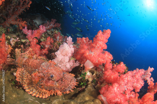 Poster Sous-marin Scorpionfish fish on coral reef