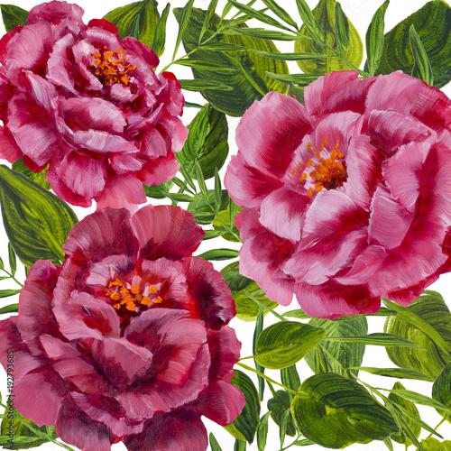 kwiaty-na-bialym-tle-projekt-rozowe-piwonie-roze-z-zielonych-lisci-kwiatowy