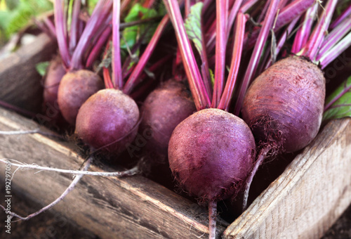 Fotografie, Obraz  Fresh harvested beetroots in wooden crate, pile of homegrown organic beets with