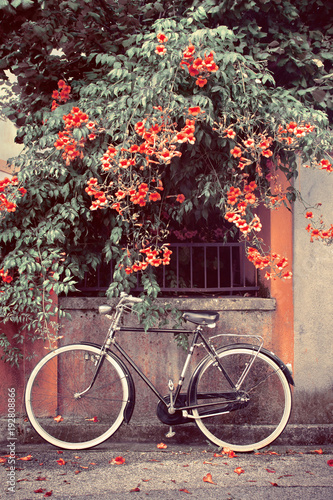 In de dag Fiets bicycle with red flowers in the background, a bike leans against the wall picture vintage effect