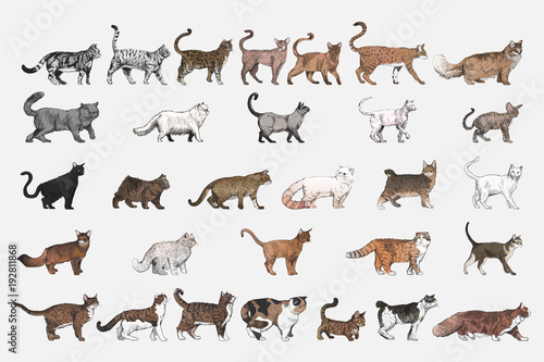 Ilustracyjny rysunek styl kot hoduje kolekcję