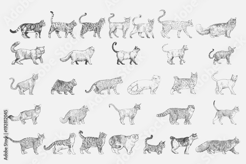 Photo  Illustration drawing style of cat breeds collection