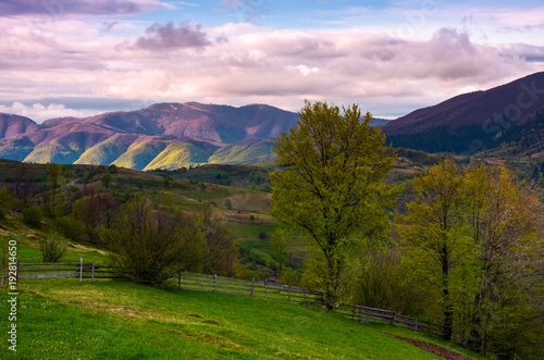 beautiful scenery in mountainous rural area. tree behind the fence on a grassy slope. gorgeous weather in springtime.