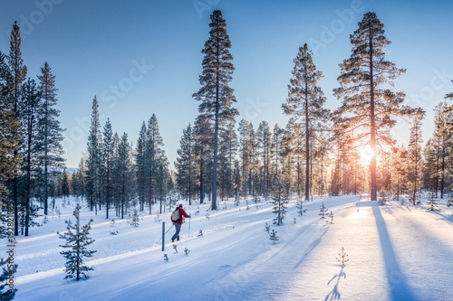 Cross-country skiing in winter wonderland in Scandinavia at sunset
