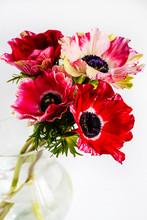Bouquet Anemones In Glass Jug