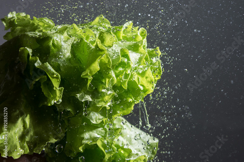 Lettuce salad and water drops.
