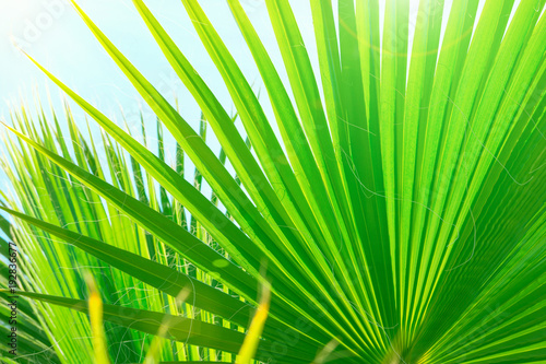 Beautiful Striped Botanical Pattern From Large Round Spiky Palm Tree Leaves On Clear Blue Sky Background