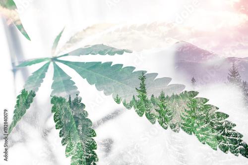 Fotografie, Obraz  Marijuana Leaf With Nature Background High Quality Stock Photo