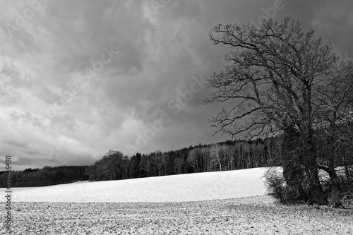 Landschaft im Winter mit beginnendem Schneefall, eine Wiese mit einem Wald im Hintergrund als schwarzweiß Foto © si2016ab