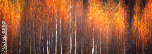 Web banner autumnal textural scenic background with motion blur, toned in vintage style