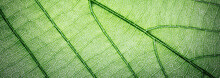 Web Banner Green Leaves Macro ...