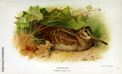 Canvas Print Illustration of bird