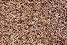 Pine Needles Texture.