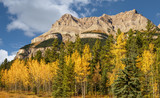Golden Aspen Autumn colors on the Icefields Parkway - Banff National Park
