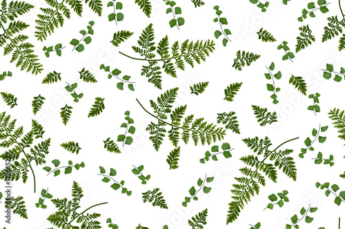 Cotton fabric Summer seamless pattern with ferns