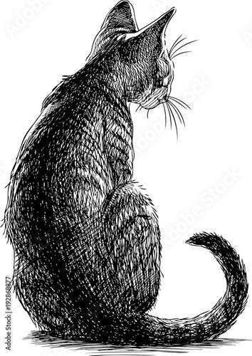 szkic-siedzacego-kotka