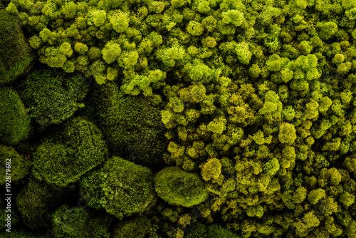 Fotografie, Obraz  Mech gromada zielonych roślin
