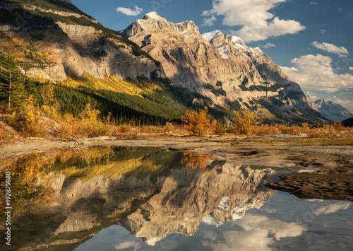 Valokuva  Golden Aspen Autumn colors on the Icefields Parkway - Banff National Park