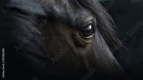 Tuinposter Paarden Pferdeportrait