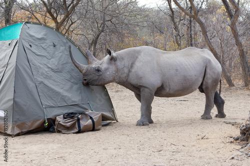 Poster Rhino rhinocéros