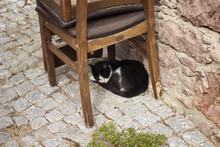 Stray Cat Sleeps Under A Chair...