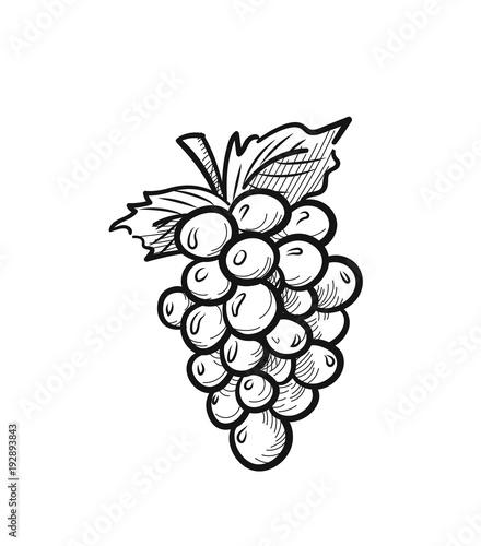 Bunch of grapes with leaf sketch icon for web, mobile and infographics Wallpaper Mural
