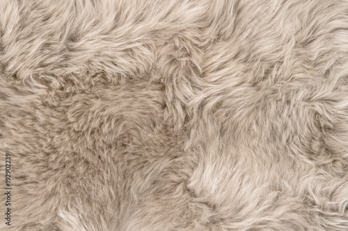 Fotomural Natural sheepskin rug background texture sheep fur